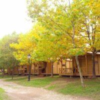Camping Prados Abiertos Gredos vistas de los bungalow