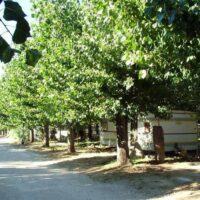 Camping Prados Abiertos Gredos zona arboleda 2