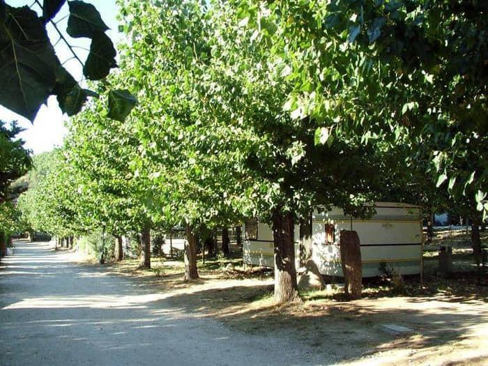 Camping-Prados-Abiertos-Gredos-zona-arboleda-2